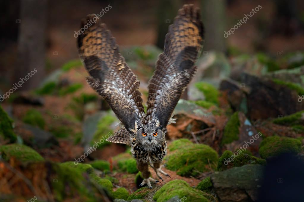 Owl in forest habitat