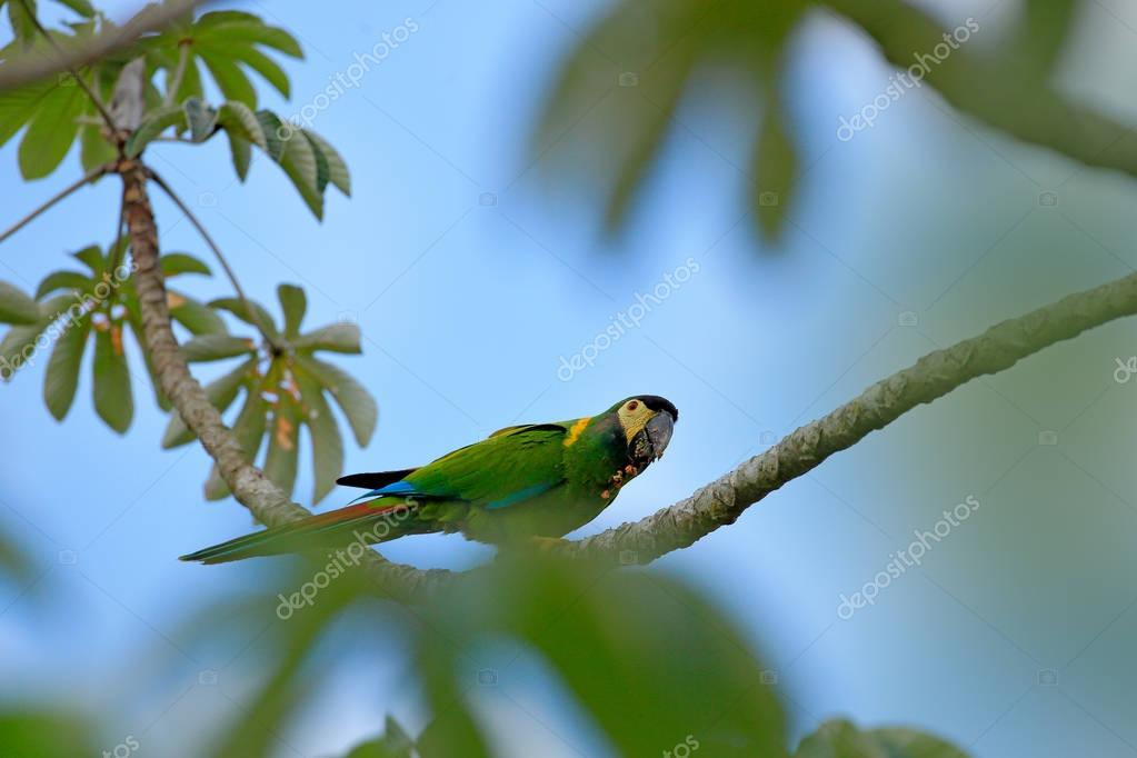 Portrait of big green parrot