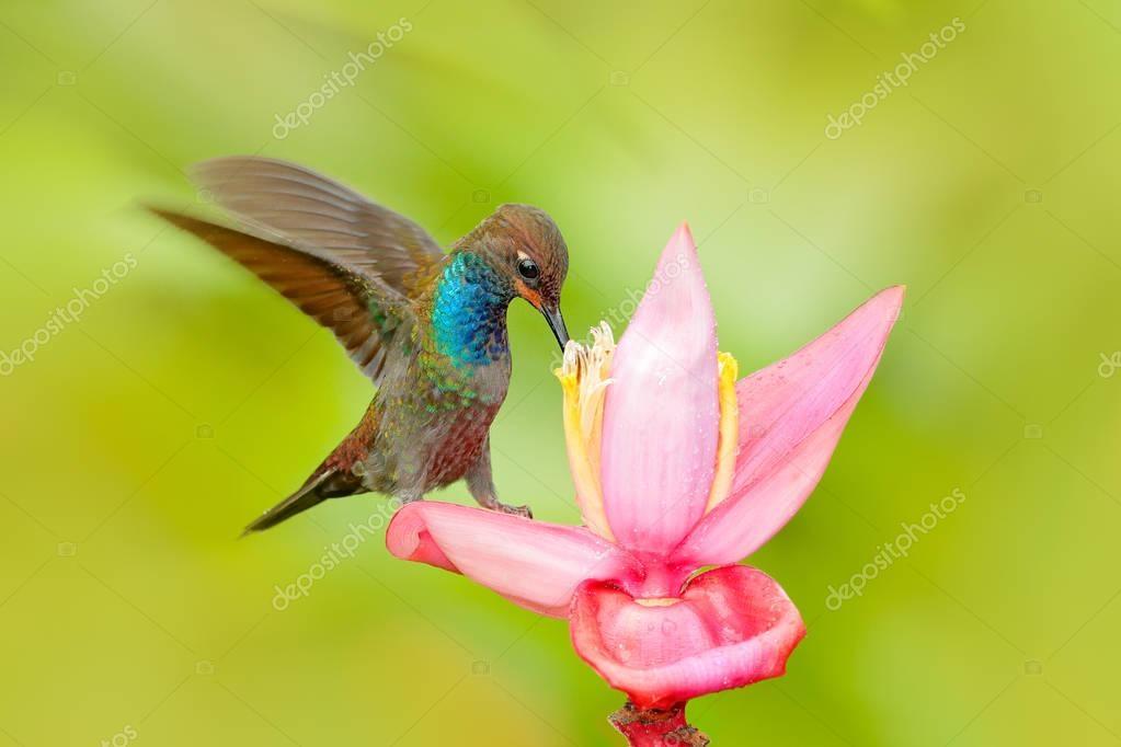 Bird sucking nectar from pink flower