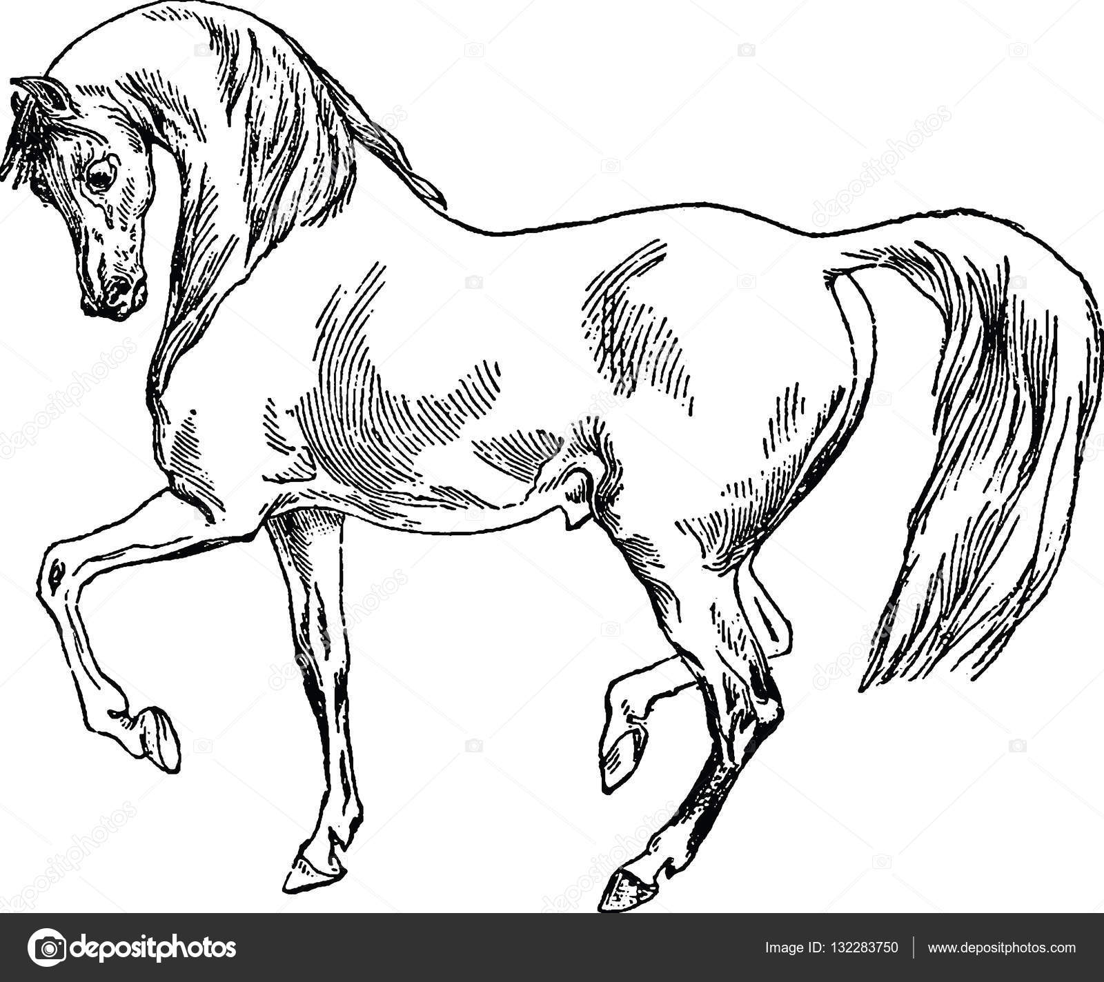 Vintage Illustration Horse Stock Photo C Unorobus Gmail Com 132283750