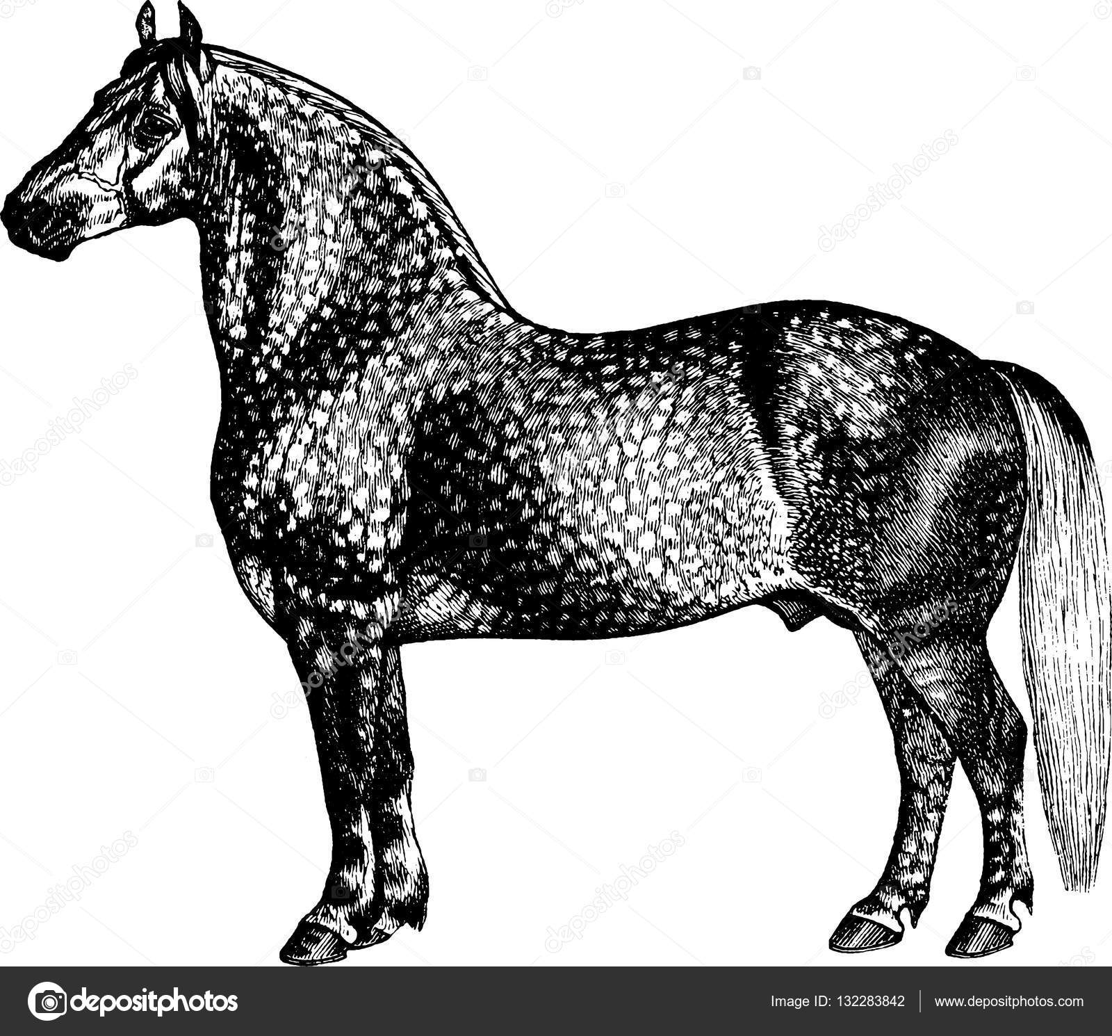 Pictures Antique Horses Vintage Illustration Horse Stock Photo C Unorobus Gmail Com 132283842