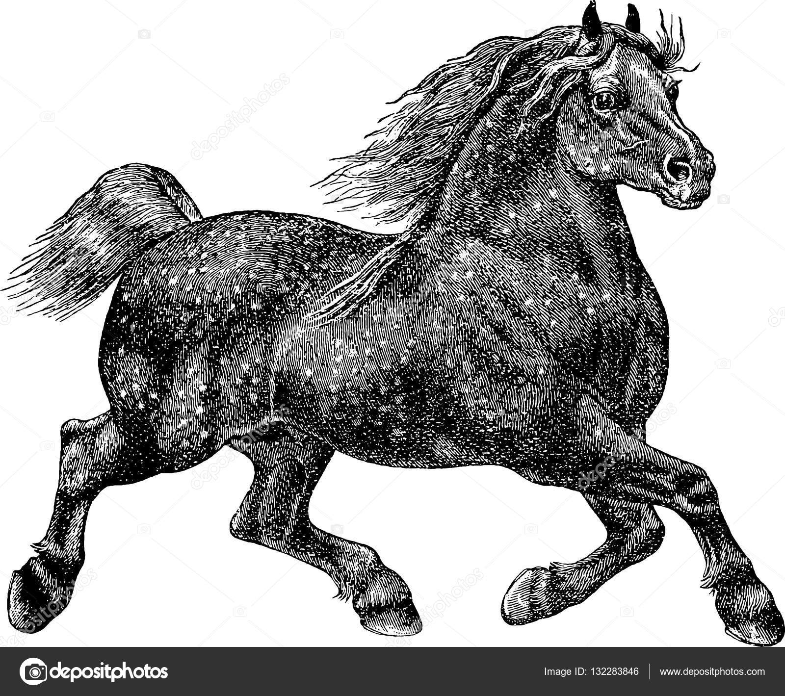 Vintage Illustration Horse Stock Photo C Unorobus Gmail Com 132283846