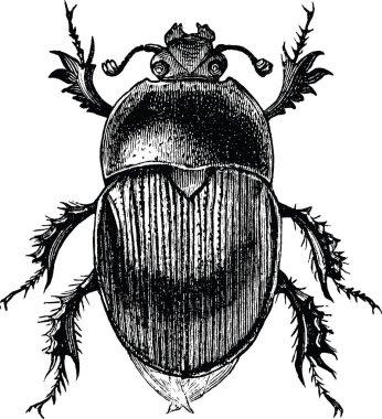 Vintage clipart beetle scarab
