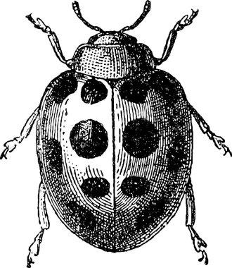 Vintage clipart beetle ladybug