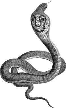 Vintage image snake