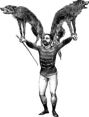 Vintage image tamer, wolves
