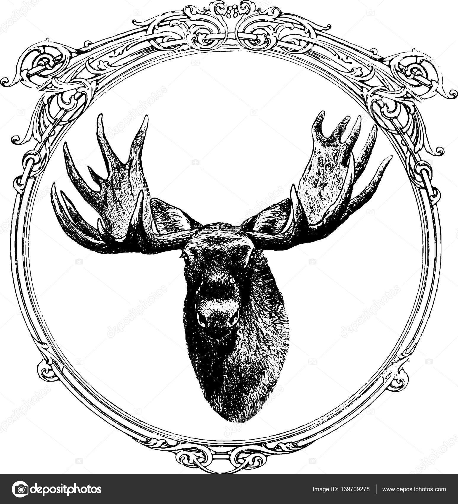 Vintage afbeelding moose in het frame — Stockfoto © unorobus.gmail ...