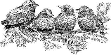 Vintage image birds on a branch