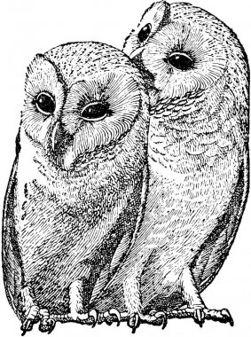 Vintage image owls