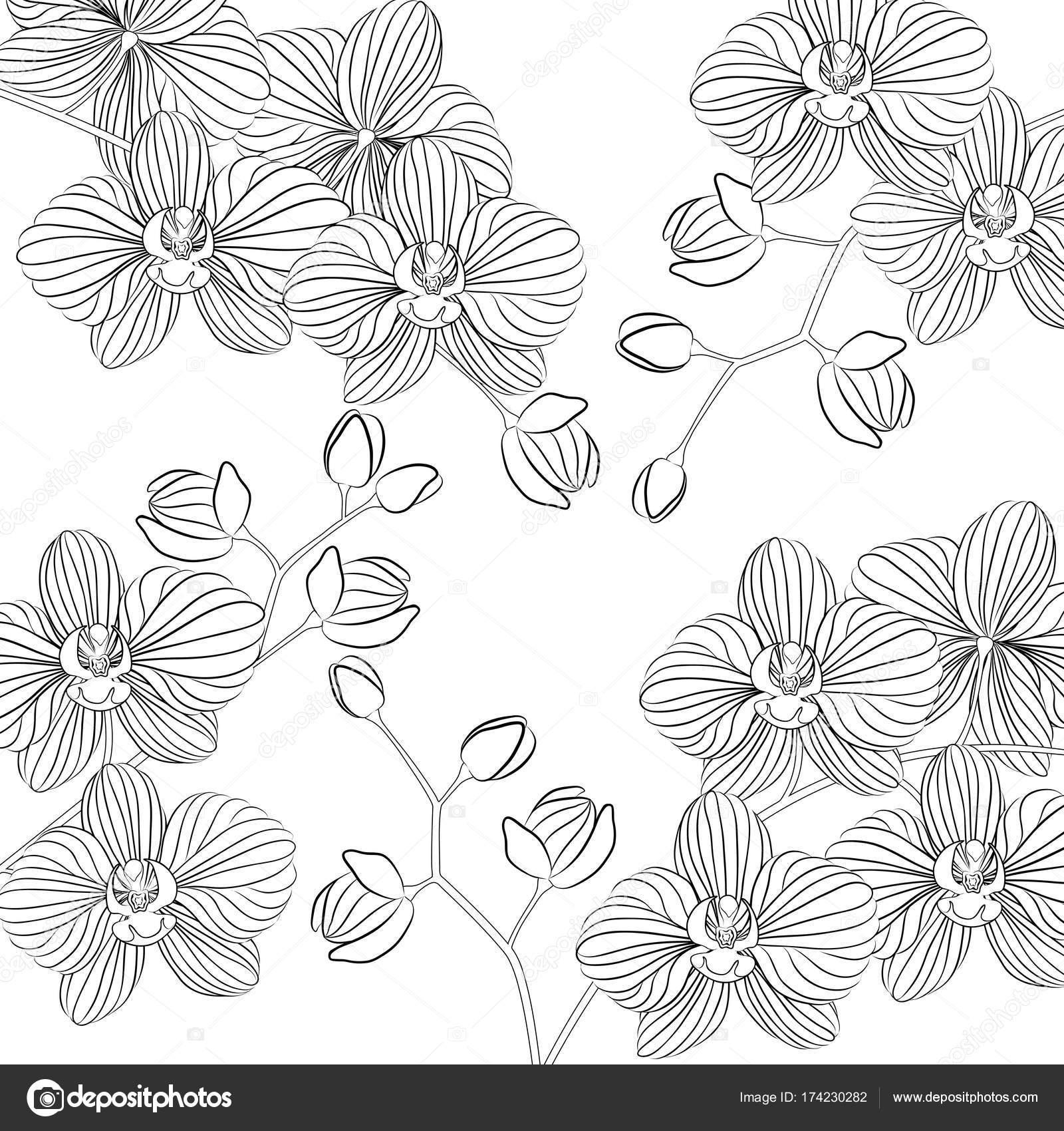 Ilustración de vector. Hermosa orquídea Phalaenopsis en una maceta ...