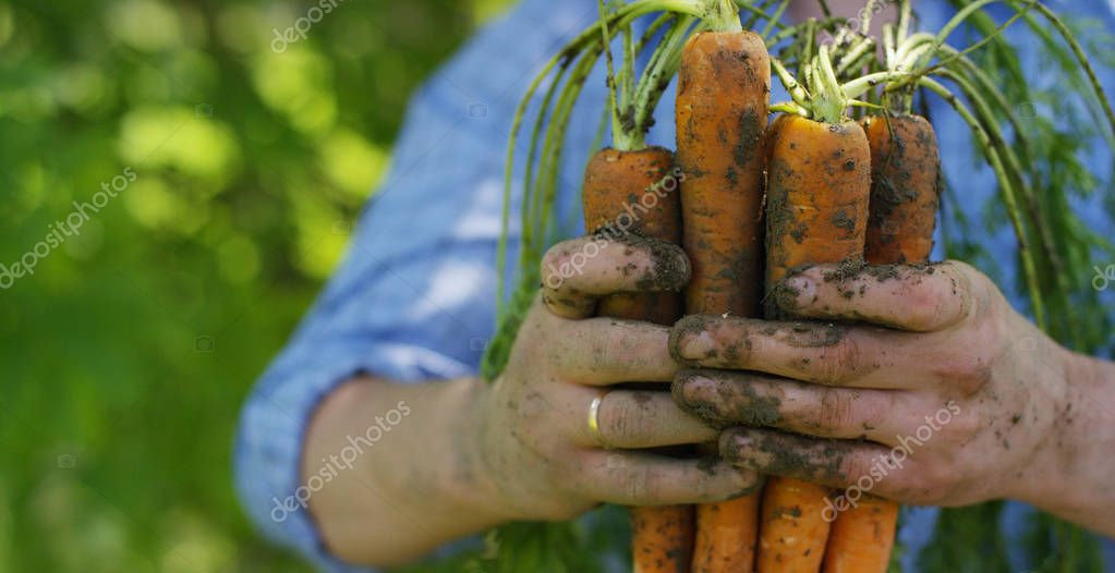 biological product of carrots