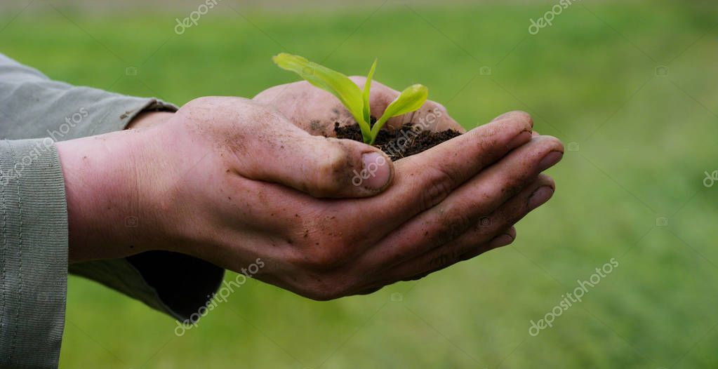 A man holds a biological sprout of life in his labor hands with the ground for planting, on a green background, concept: lifestyle, farming, ecology, bio, love, tradition, new life.