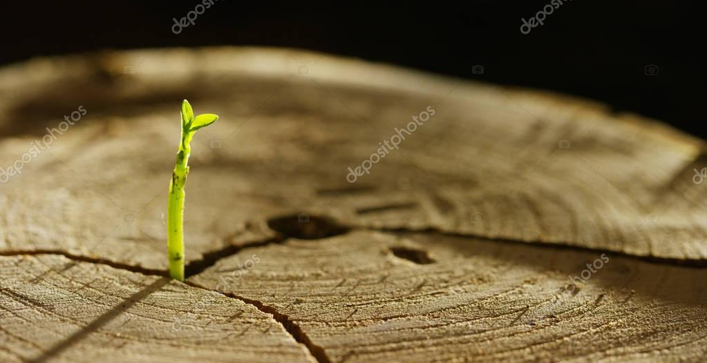 On a wet stump there is a new sprout with life, a magical atmosphere, in the background of the dark earth, a concept: save the planet, new life, ecology, bio,love,tradition, environment,future people.