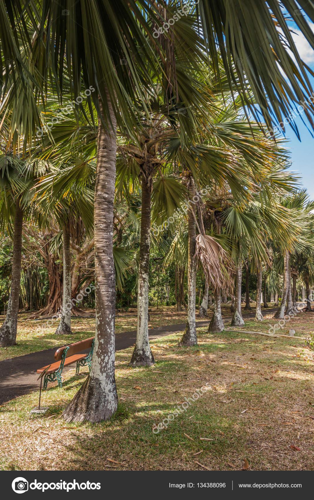 Pamplemousses botanical garden palm alley — Stock Photo © dudewayap ...