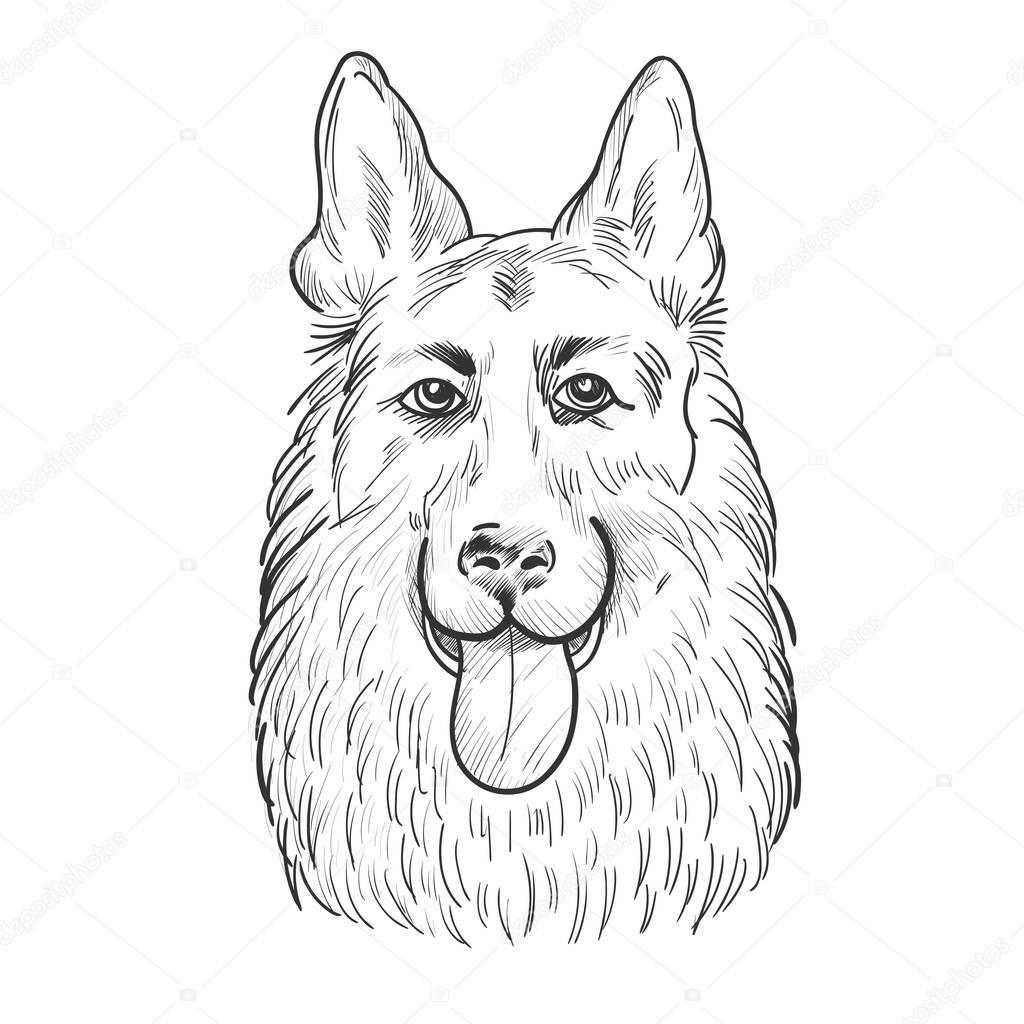 German Shepherd dog face isolated on white background.