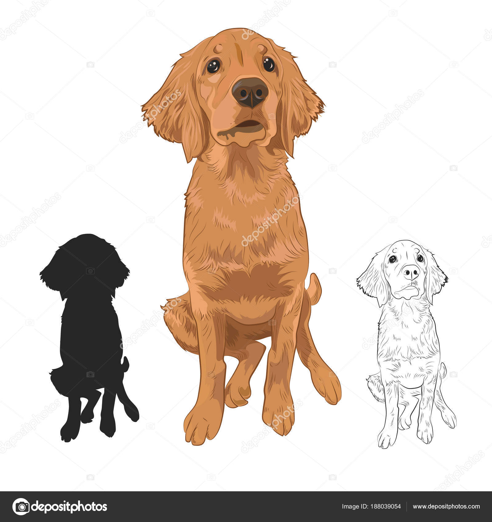Golden Retriever Puppy Isolated On White Background Stock Vector