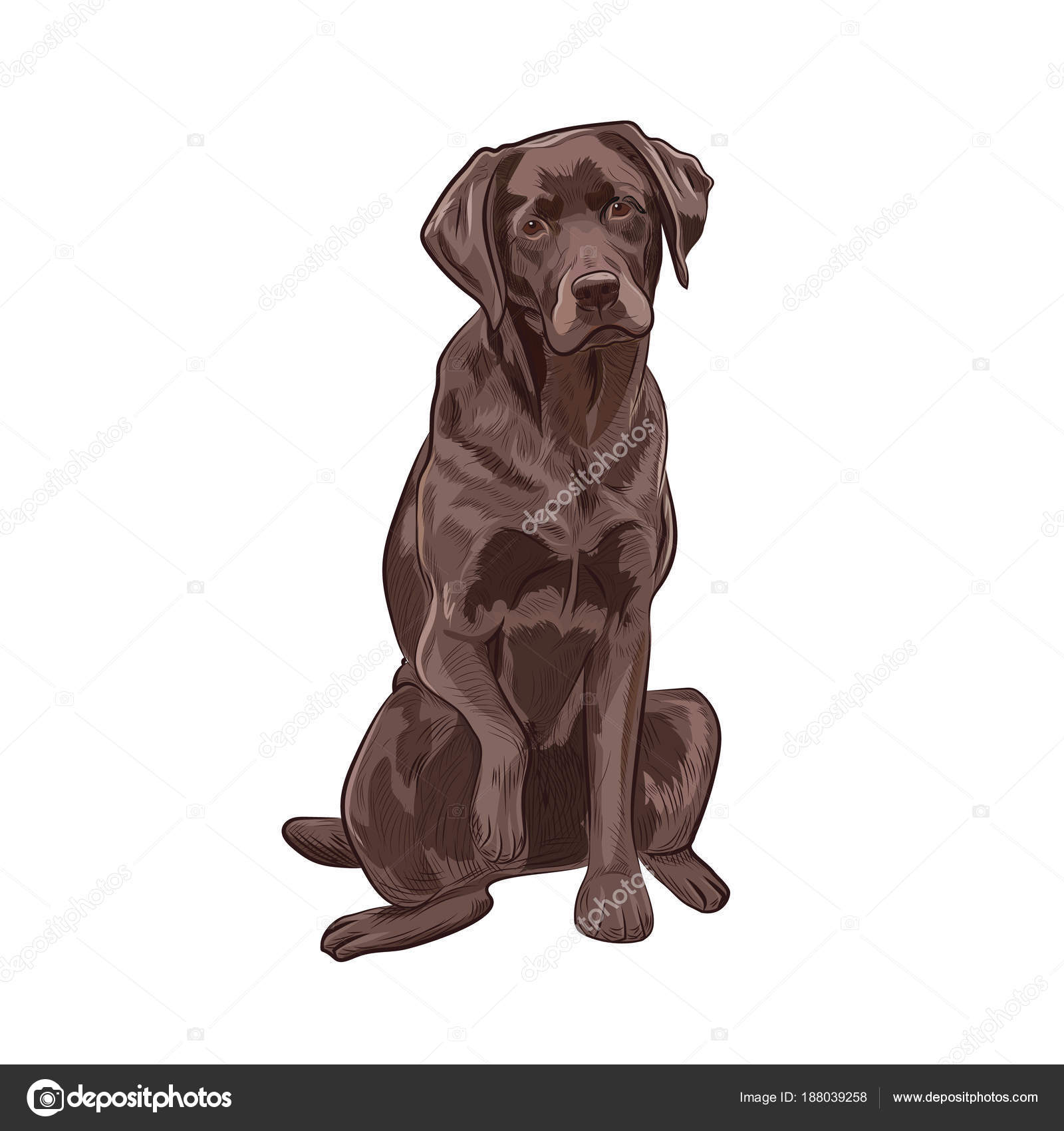 Chocolate labrador sitting and giving a paw. — Stock Vector ...