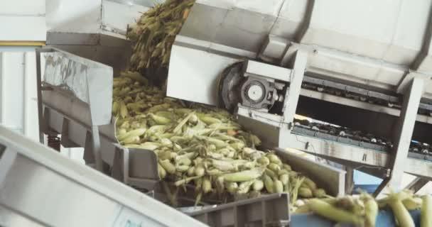 Lavorazione Del Mais.Fabbrica Di Lavorazione Del Mais