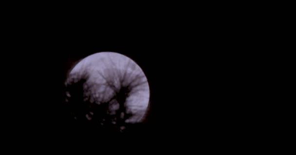 Měsíc v úplňku zpoza stromů