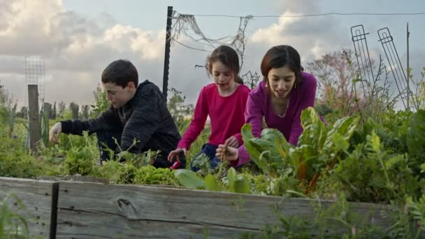 Two gilrs and a boy on an organic vegetables garden working and talking