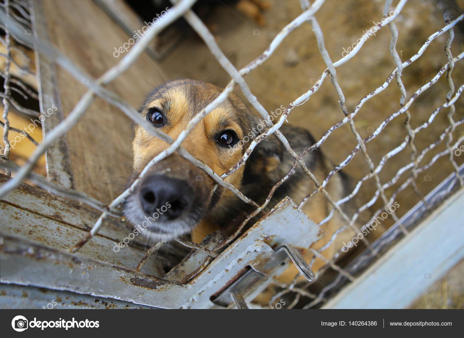 34eba5160691 Καταφύγιο ζώων. Επιβίβασης σπίτι για σκύλους — Φωτογραφία Αρχείου ...