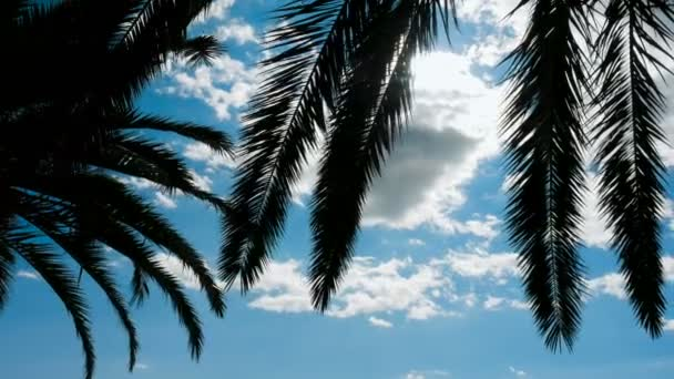 branch of palm trees swaying in the wind in Sunny Montenegro