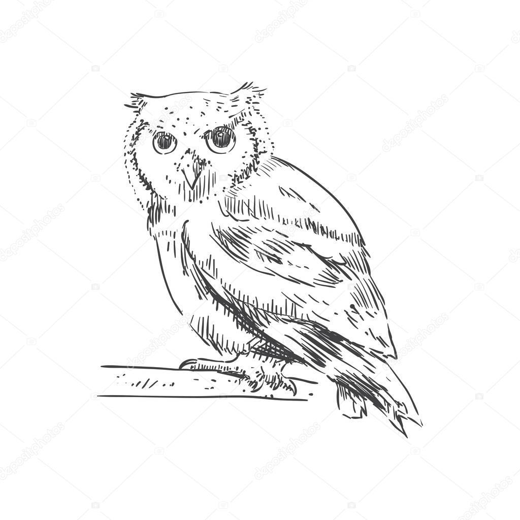 Черно-белая птица-сова. Векторная иллюстрация — Вектор ...