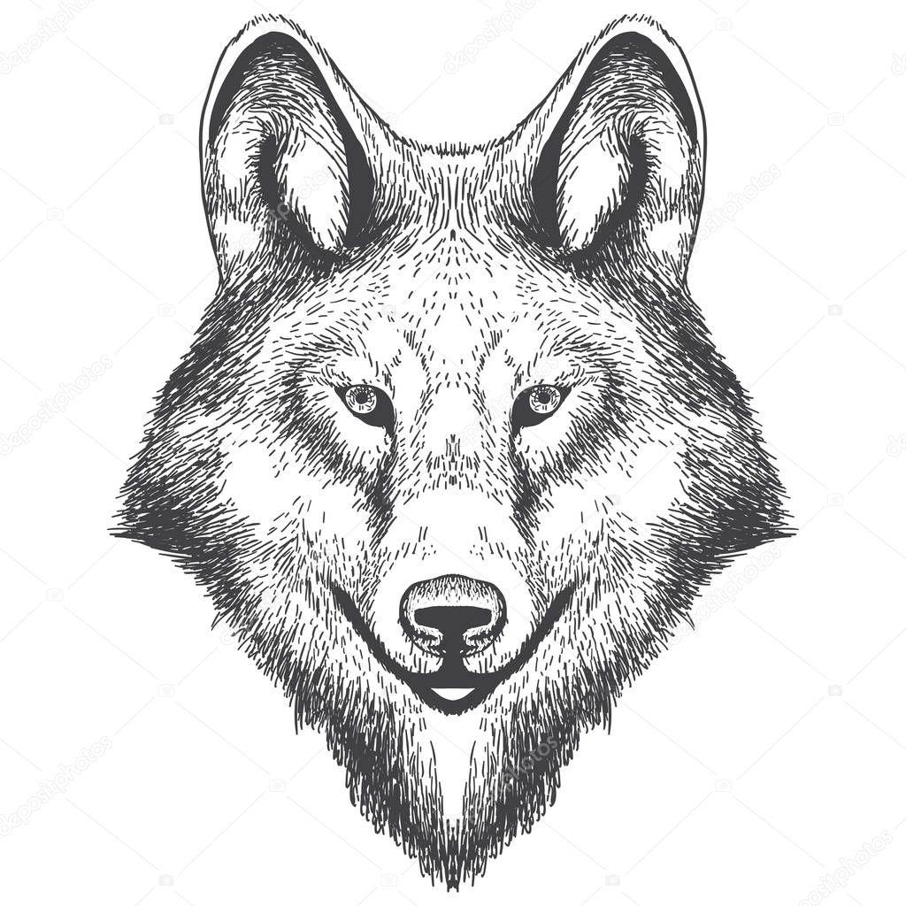 頭手ブローチのオオカミのイラストベクトル図 ストック