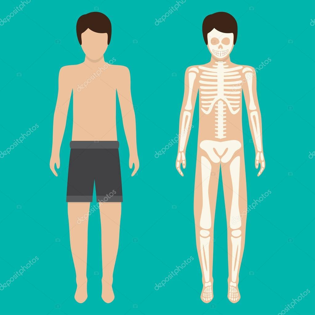 Menschlichen Körper und Skelett-System. Vektor-illustration ...