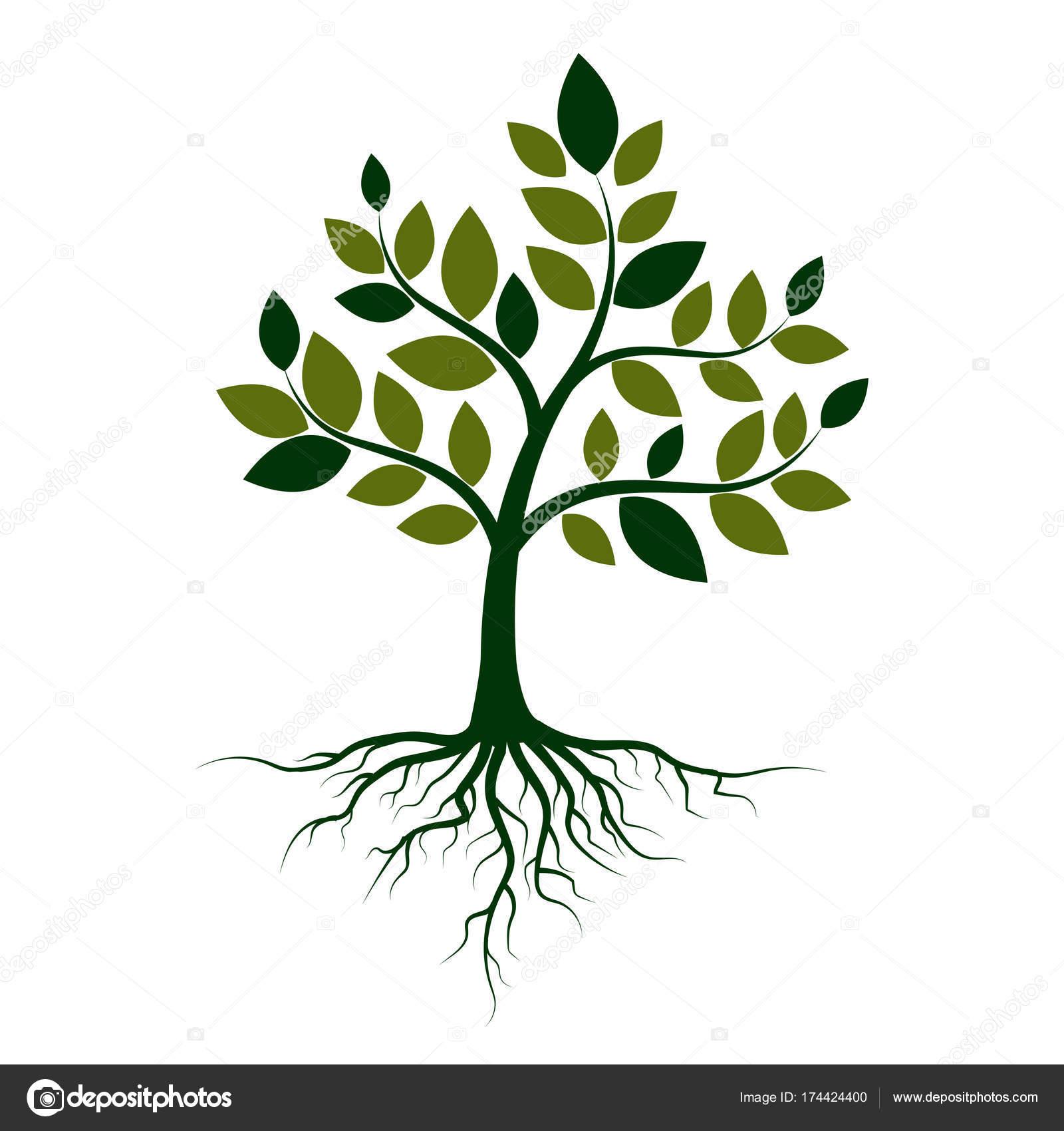 Зеленое дерево с корнями на белом фоне. Векторные ...