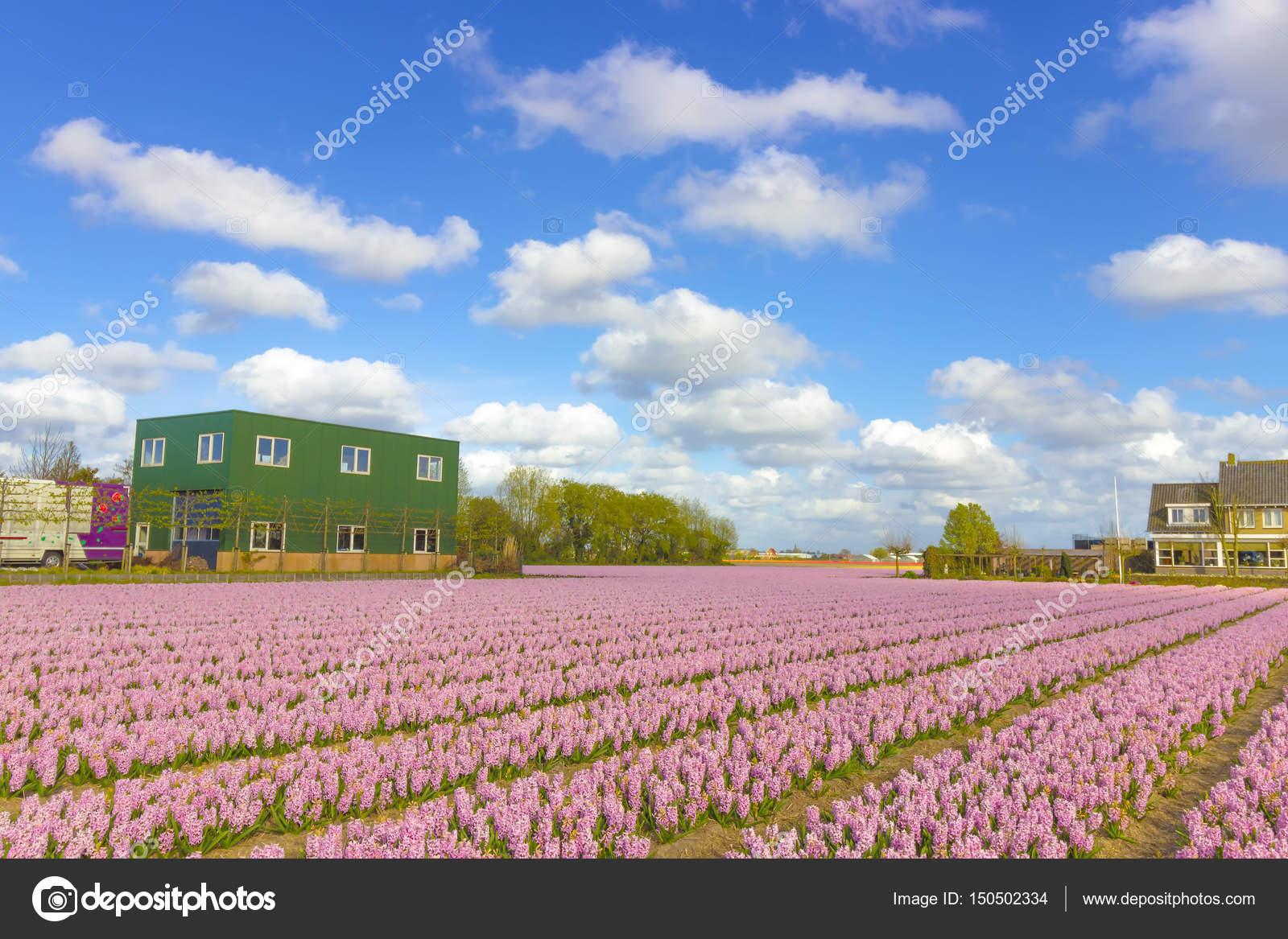 Schöne Blumenwiese Im Frühling In Den Niederlanden Stockfoto