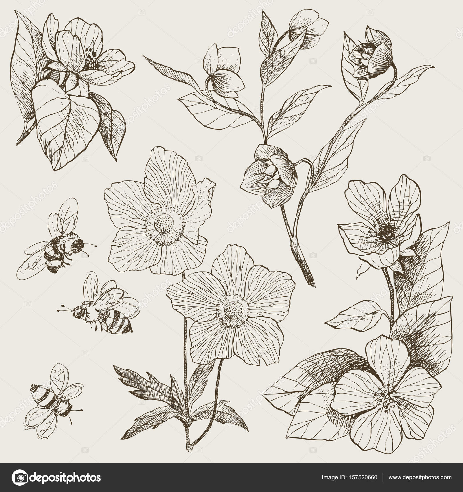 Vintage botanical illustration flowers set — Stock Vector © ledepict