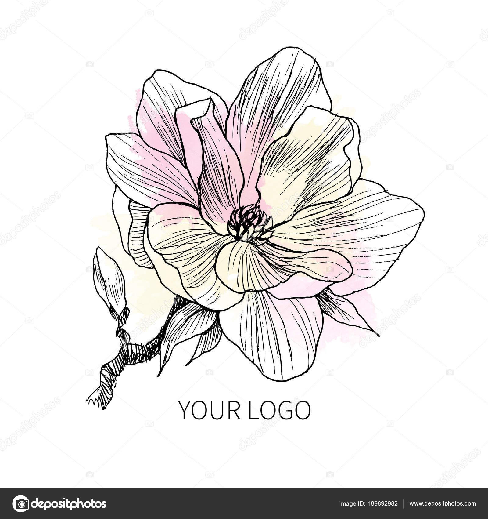 Tusche Bleistift Die Blätter Und Blüten Der Magnolie Zu Isolieren