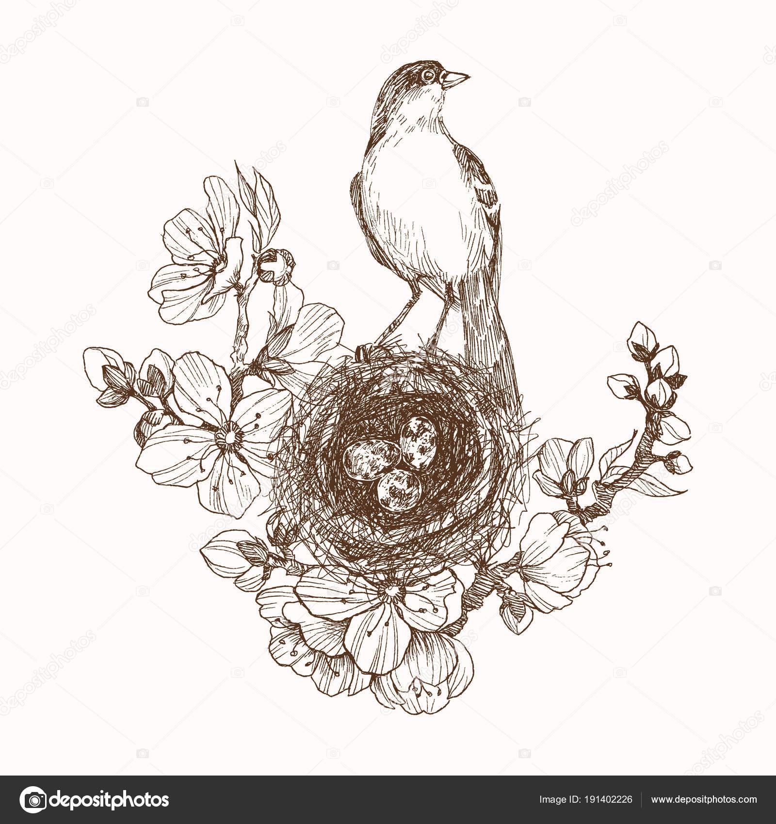 Ilustración de vector de nido dibujado mano con huevos manchados y ...