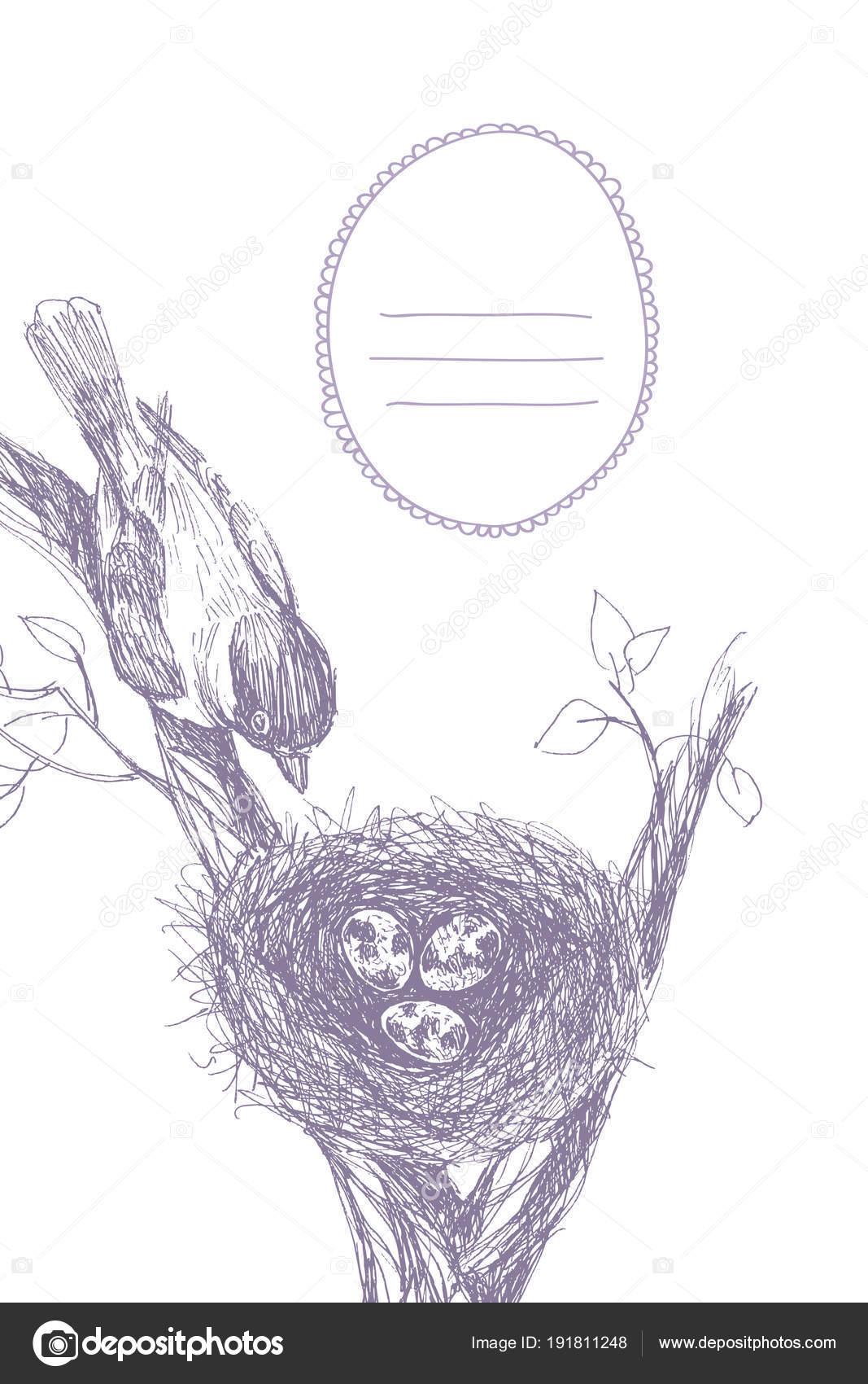Ilustración de vector de nido dibujado mano manchados huevos y aves ...