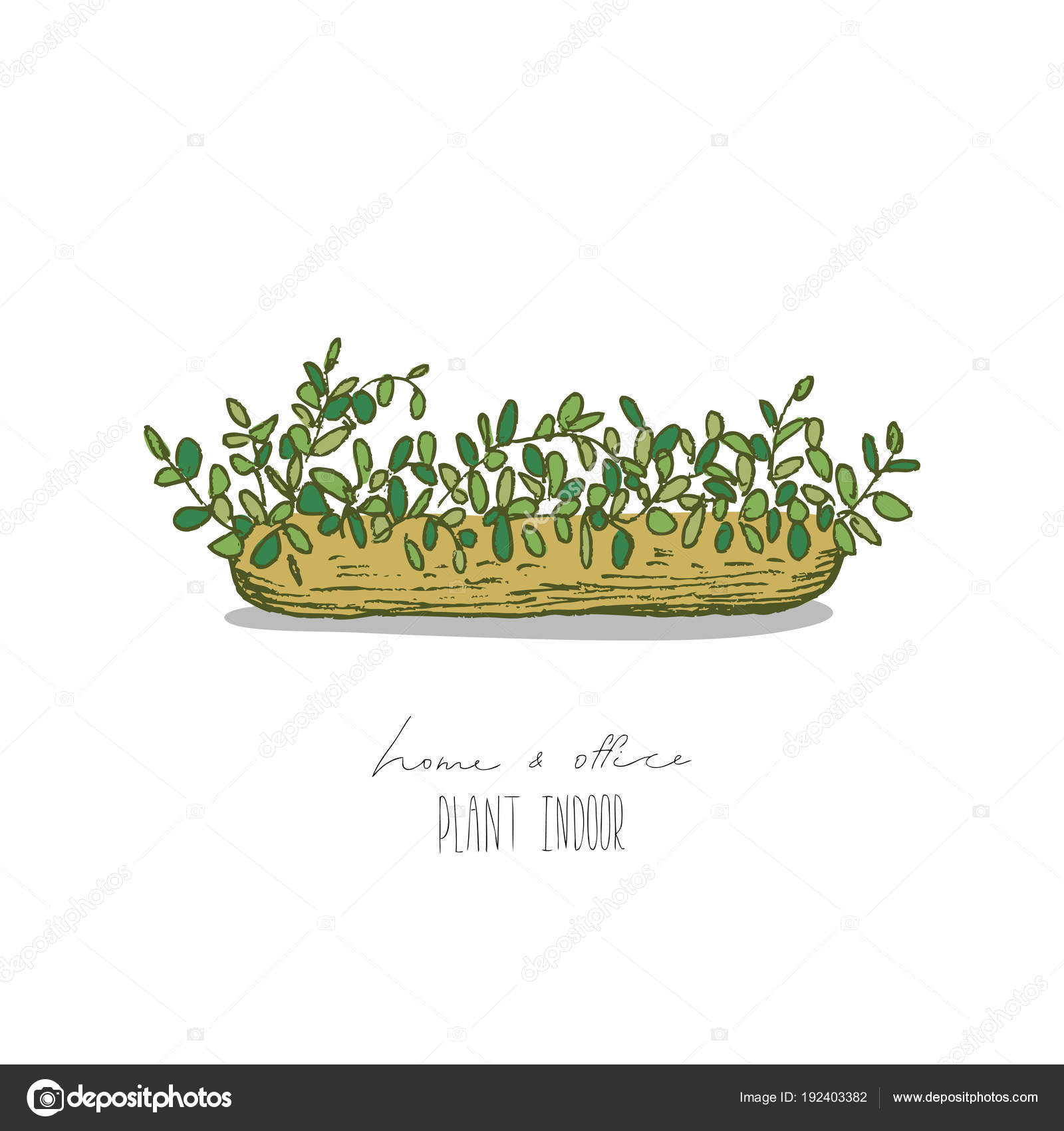 indoor home office plants royalty. Hand Drawn Vector Illustration Isolated On White Background. Home And Office Plants In Pot. \u2014 By Ledepict.gmail.com Indoor Royalty