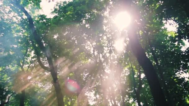 paprsek slunce mezi stromy