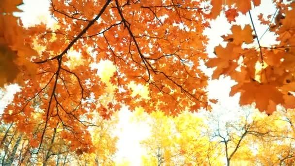 Zlatý vílí podzim v parku s listnatými stromy