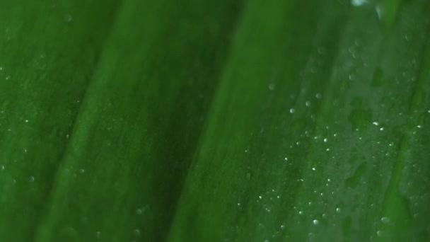 kapky vody na zeleném listu zblízka
