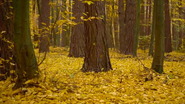 Podzimní les žluté listy koberec na zem podzimní pozadí