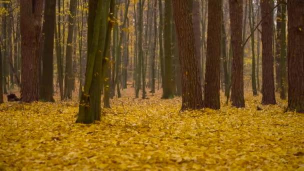 Podzimní les koberec žluté listy na podzim pozadí země s padající listí