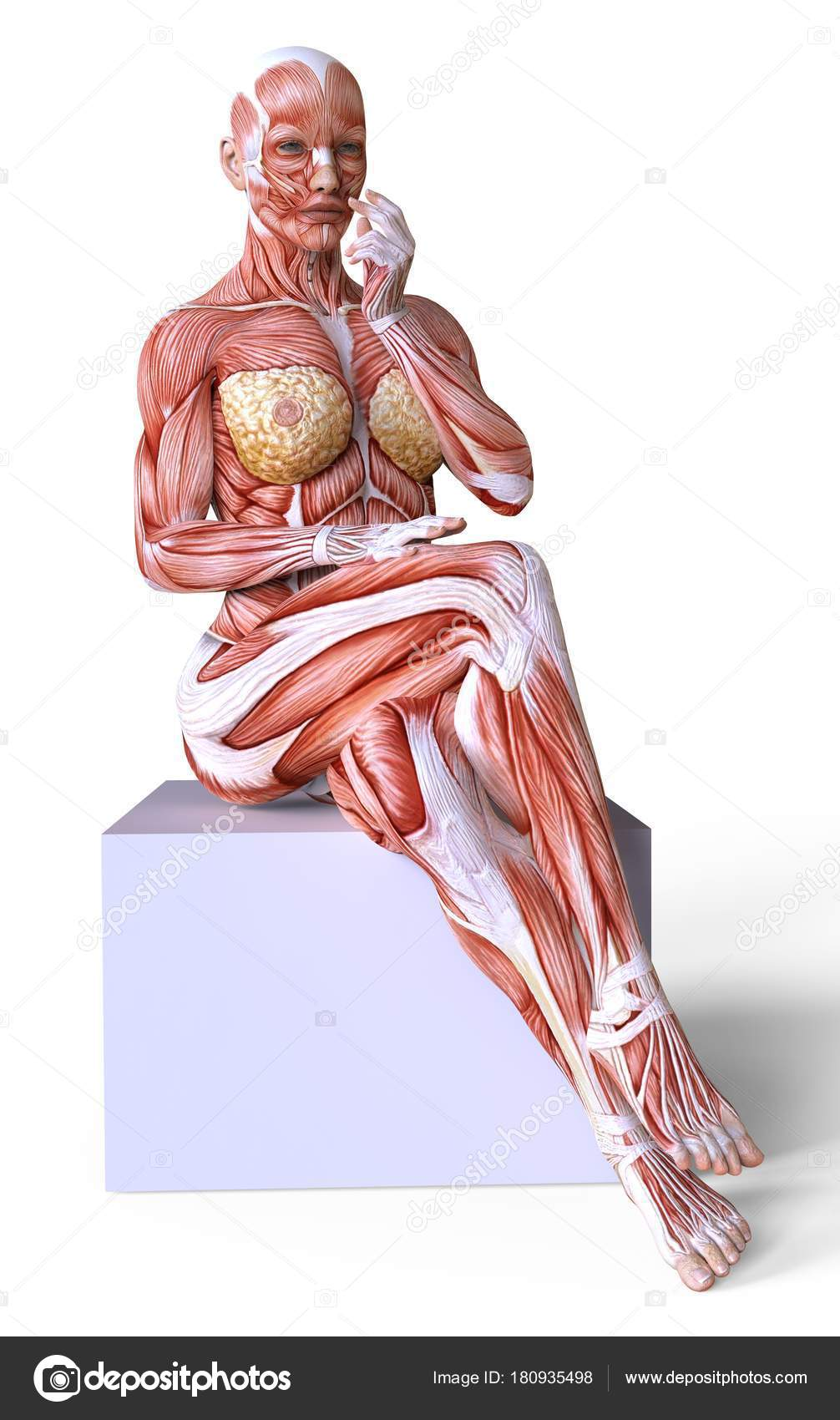 female body without skin, anatomy and muscles isolated on white — photo by  e71lena
