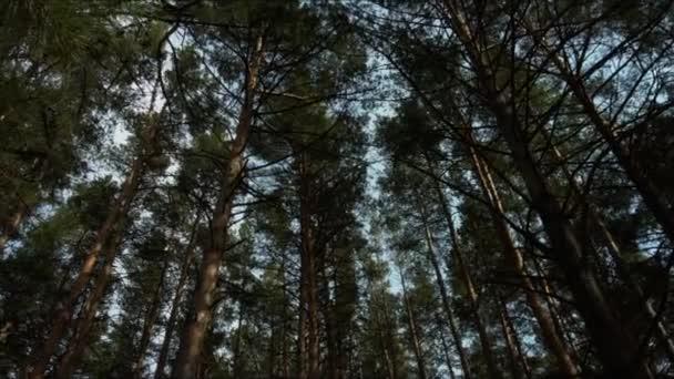 Stromy v krásném lese
