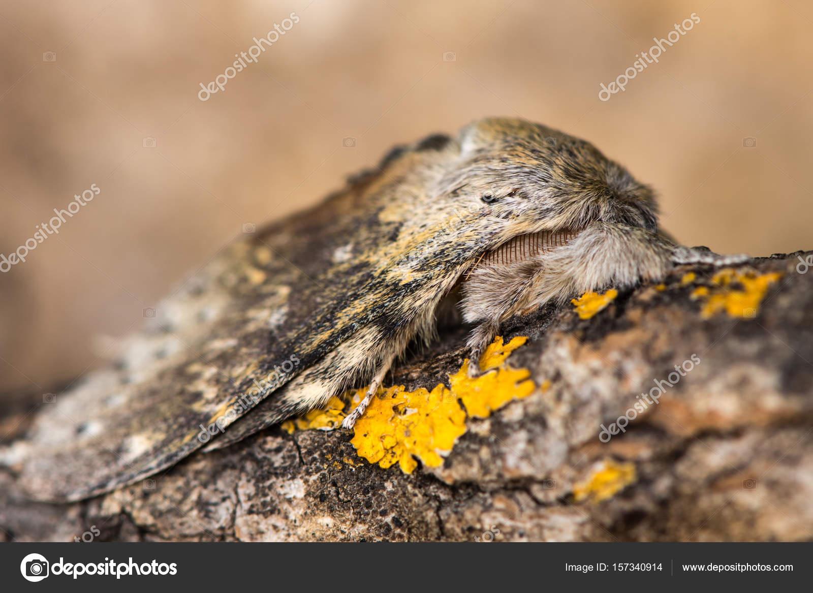 εικόνα του μαύρου τριχωτό μουνί