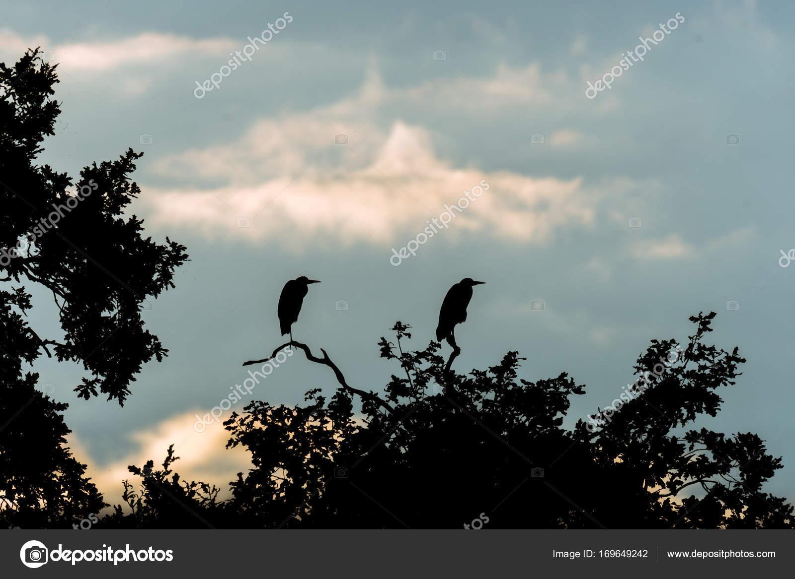 velcí ptáci muži