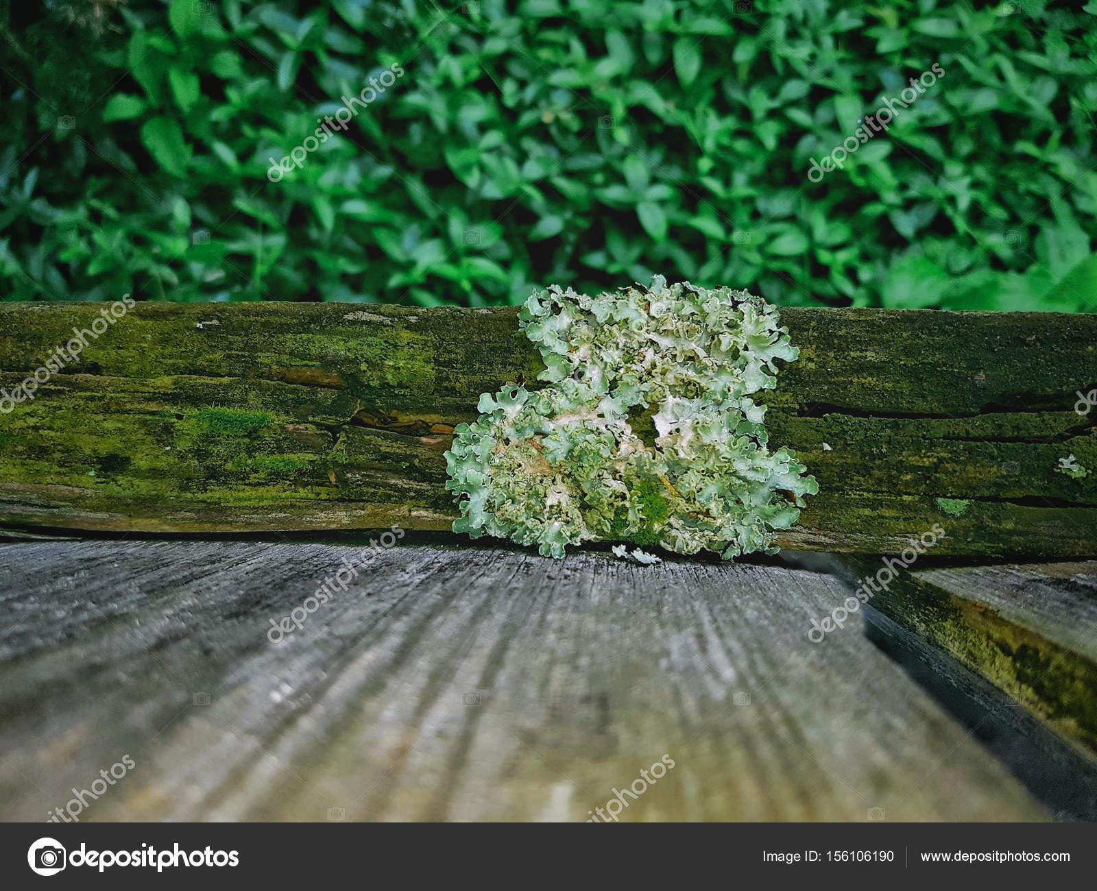 Flechten Auf Holz Zaun Stockfoto C Gstalker88 156106190
