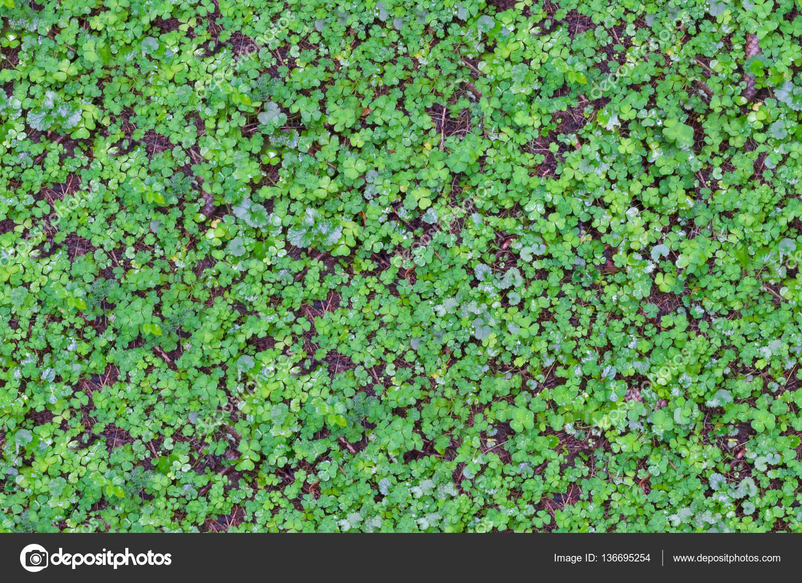 Rasen Und Boden Pflanzen Textur Stockfoto C Trirofen Gmail Com