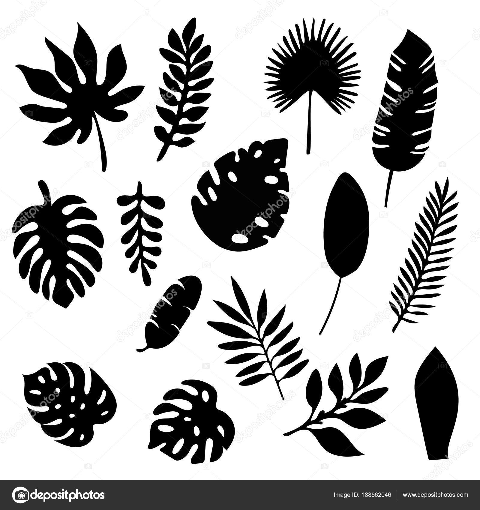 Clipart Palm Leaf Black And White Palm Leaves Silhouettes Set Isolated On White Background Tropical Leaf Silhouette Elements Set Isolated Palm Fan Palm Monstera Banana Leaves Vector Illustration In Black And 30000 flower clipart black and white free download. https depositphotos com 188562046 stock illustration palm leaves silhouettes set isolated html