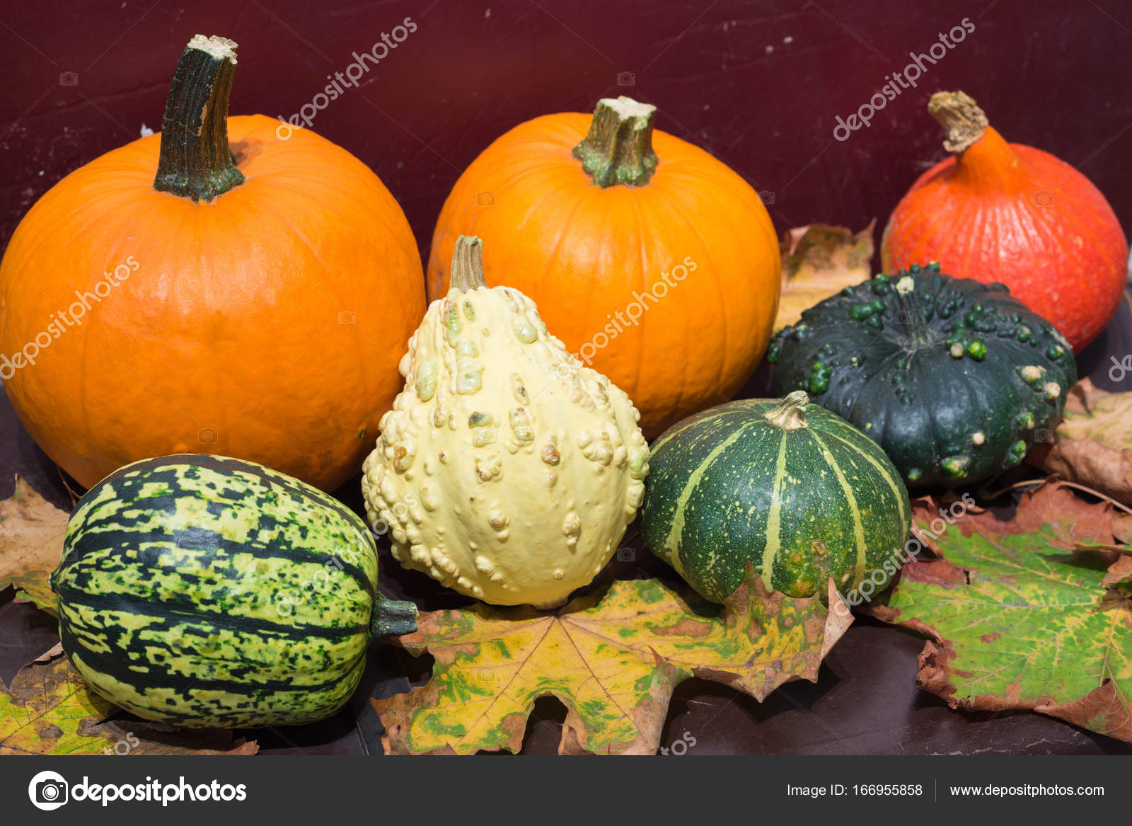 Pumpkins Different Types Good For Eat And Decorative Stock Photo