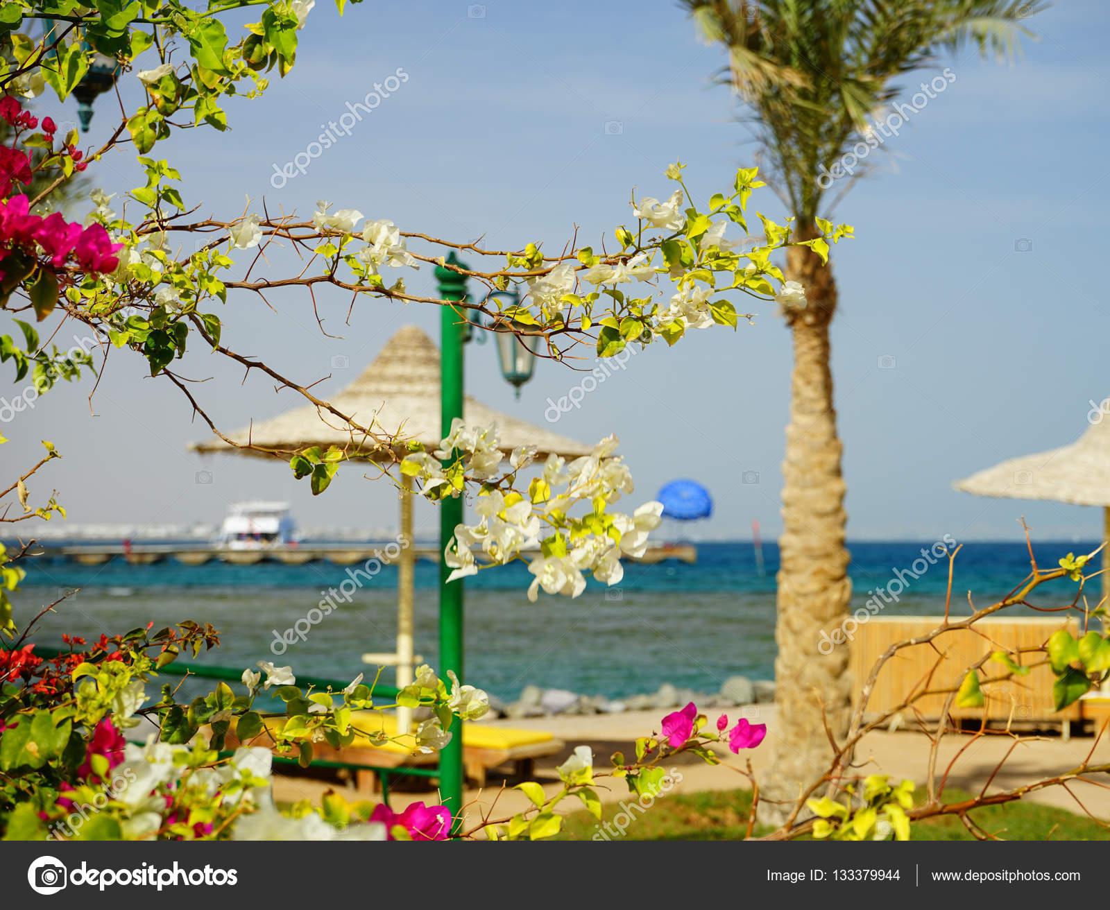 Sehen Sie Sich Auf Territorium Am Strand Von Desert Rose Resort